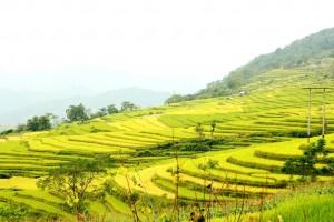 JV Vietnam