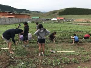 jv website lotus gardening 2017